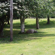 A period of rest in Brynford